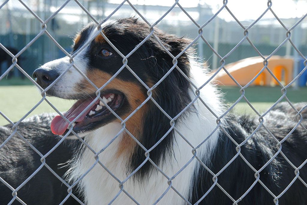 Top Notch Kennels (14 of 51)