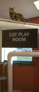 Cat Play Room